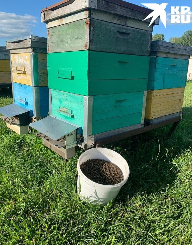 Мертвых пчел пасечники выносят ведрами. Фото: Предоставлено героем публикации