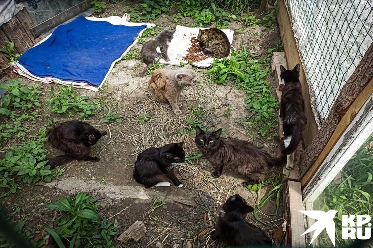 Восемь бродячих котов нашли свой новый дом.