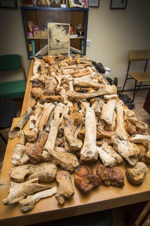 В районе пещера «Таврида» продолжается уточнение видового состава фауны. Фото: пресс-служба КФУ.