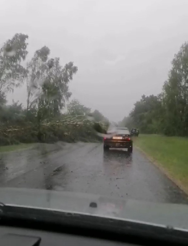 Поваленные деревья перекрыли дорогу на Домачево. Фото: Viber-чат Город Брест