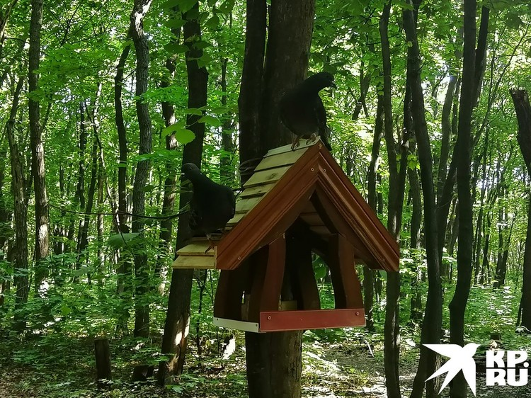 Пернатые обитатели лесопарка оценили новинку