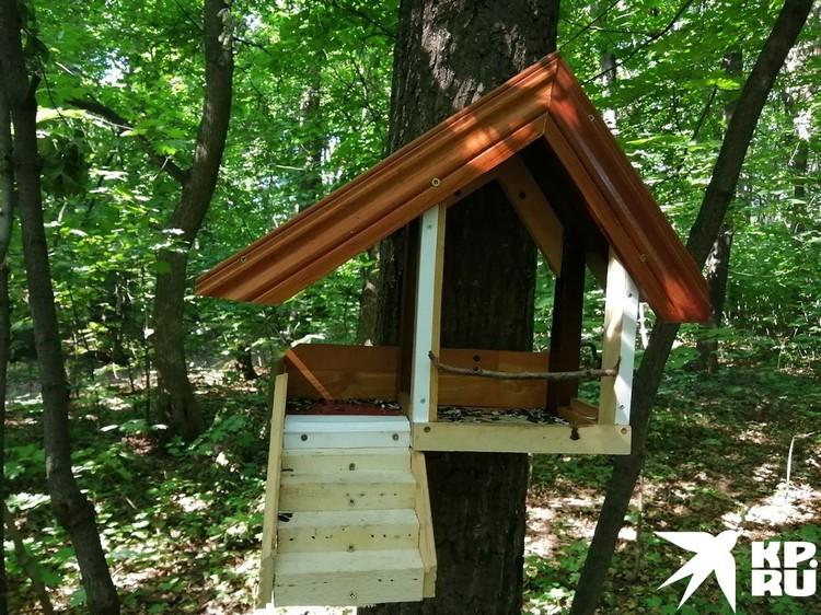 Местные жители всегда активно подкармливали птиц и белок в лесопарке