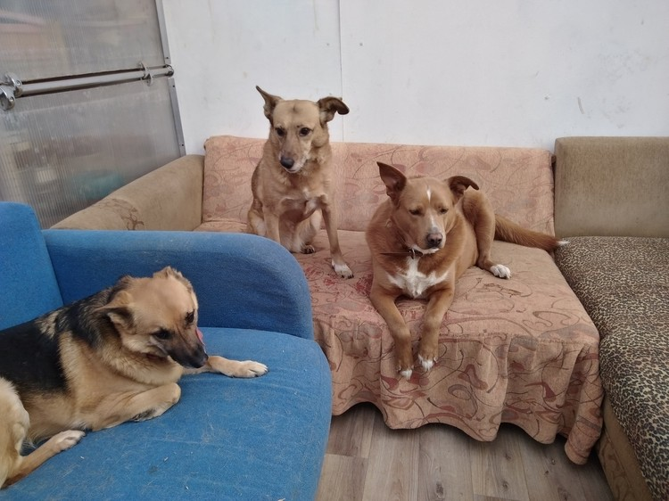"""Сейчас все животные живут в комфорте, тепле и заботе. Фото: """"Добрый дом"""""""