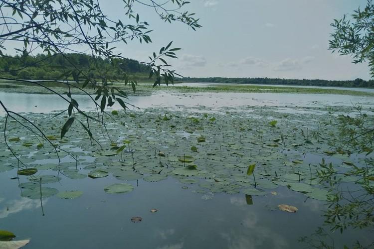 Лучшее место, кроме дома с кондиционером, - тень от деревьев на берегу реки или озера
