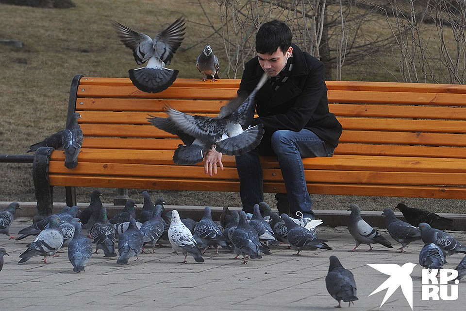 Лихорадку Западного Нила принесли в Россию птицы. Фото: Евгения ГУСЕВА