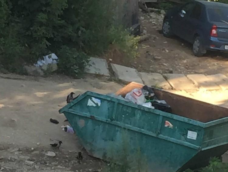 """На берегу стоит контейнер для мусора, но многие автомобилисты кидают мусор просто так. Фото: предоставлено """"Комсомолке"""""""