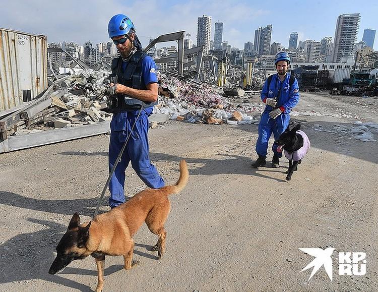 На месте завалов работают кинологи с собаками-поисковиками.