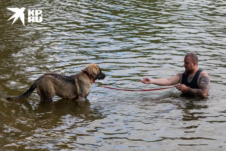 Первое время щенки могут бояться заходить в воду.