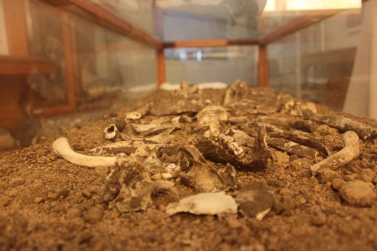 В одной из комнат музея можно увидеть скелет знатной половчанки, погребенной в XXI-XXII веке