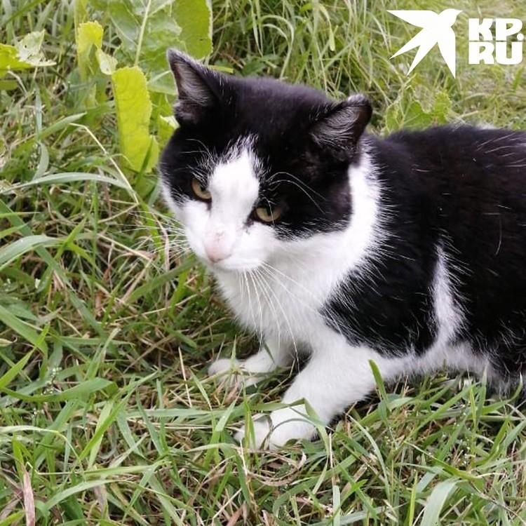 Кошку оставили в колонии. Фото: ГУФСИН России по Новосибирской области.