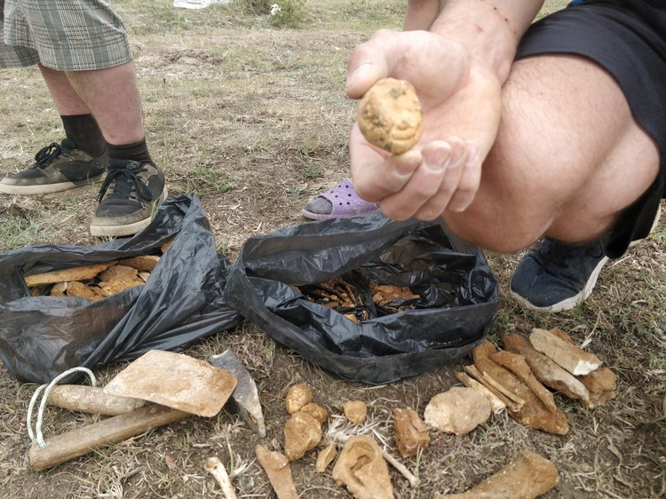 Дмитрий Гимранов показывает копролиты гиен и другие найденные части животных