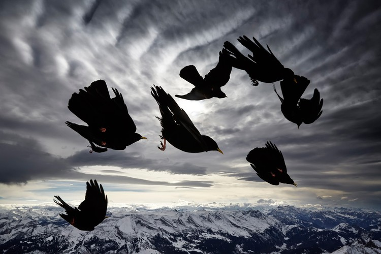 Alessandra Meniconzi, Switzerland / Wildlife Photographer of the Year