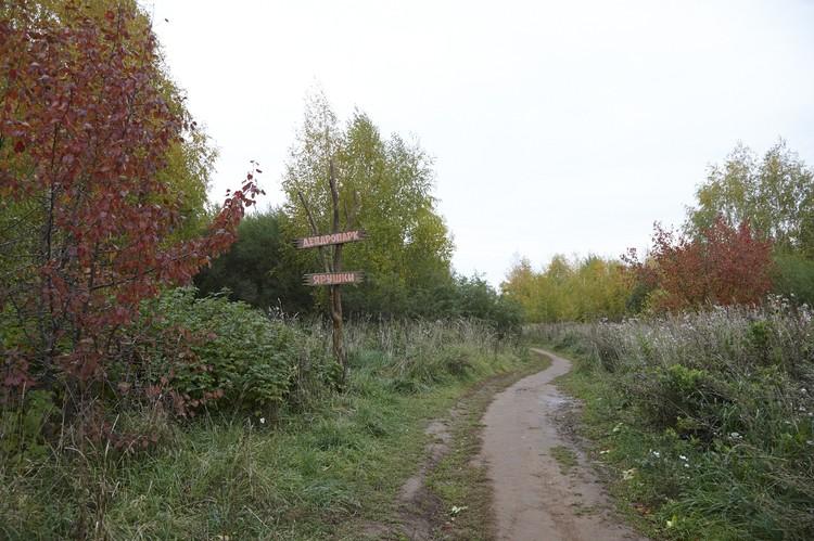 Ярушкинский дендропарк станет особо охраняемой территорией