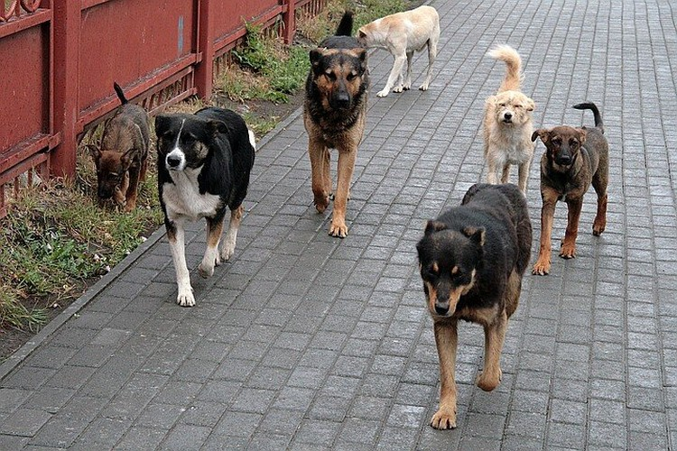 Бездомные собаки прошлой зимой держали в страхе жителей Тольятти и Новокуйбышевска