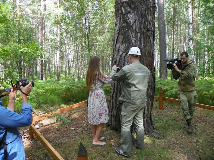 """Чтобы охватить ее ствол, одному человеку рук не хватит. Фото: пресс-служба национального парка """"Шушенский бор"""""""