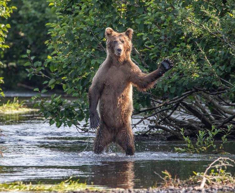 Всем привет! Аляска. Фото: Eric Fisher/Comedy Wildlife Photography Awards