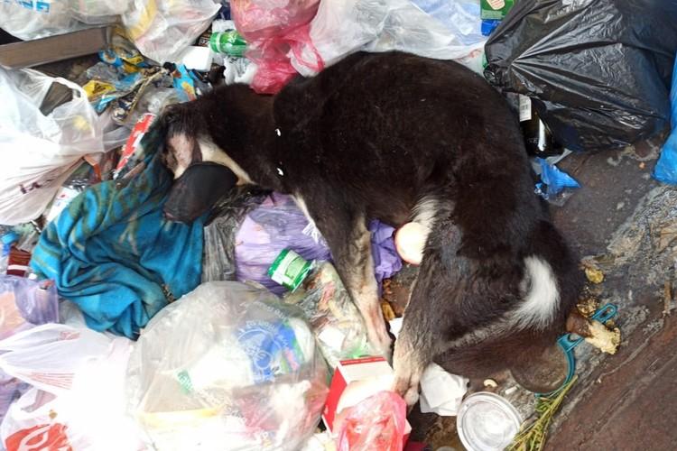 Избитую и окровавленную собаку просто выкинули в мусор. Фото: vk.com/club126032008