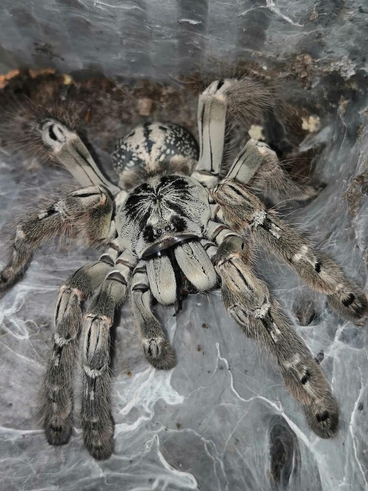 Этот паук укусил Дмитрия. Фото: Дмитрий ЖЕЛТИКОВ.