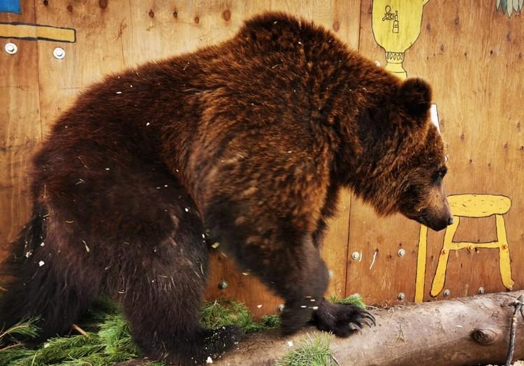 В планах переезд медведей на волю. Фото: Сибирский зоопарк