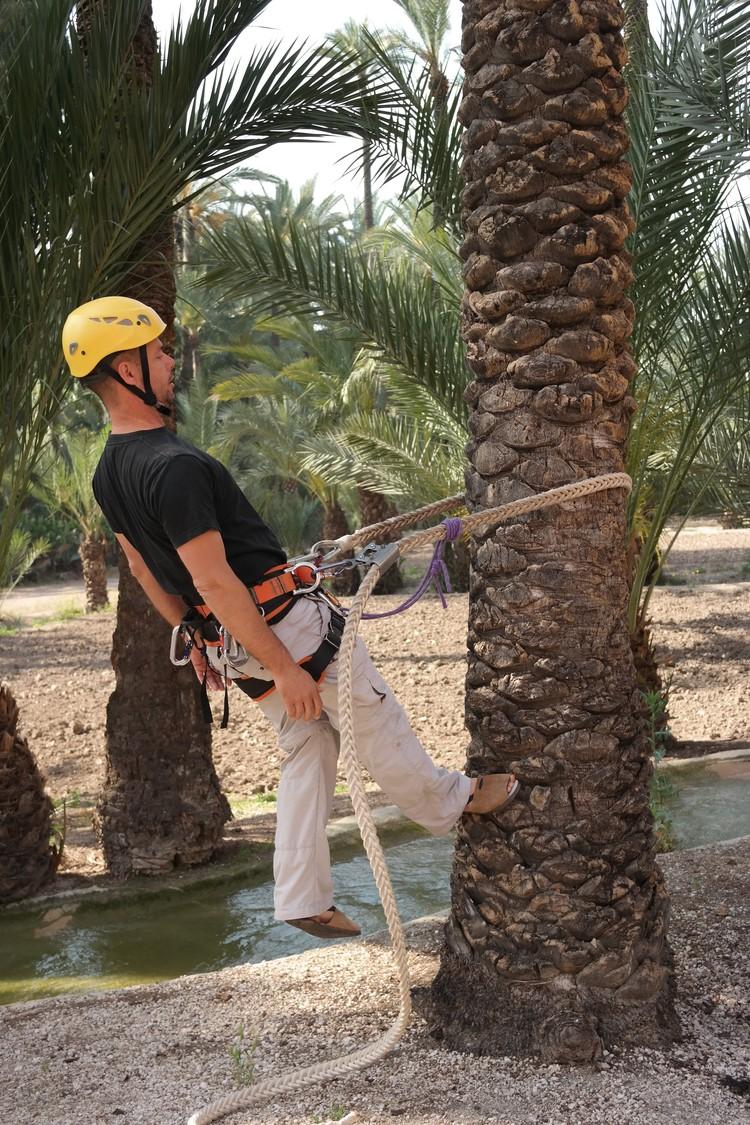 В Музее Пальмераля показывают всю технологию работы с пальмами.