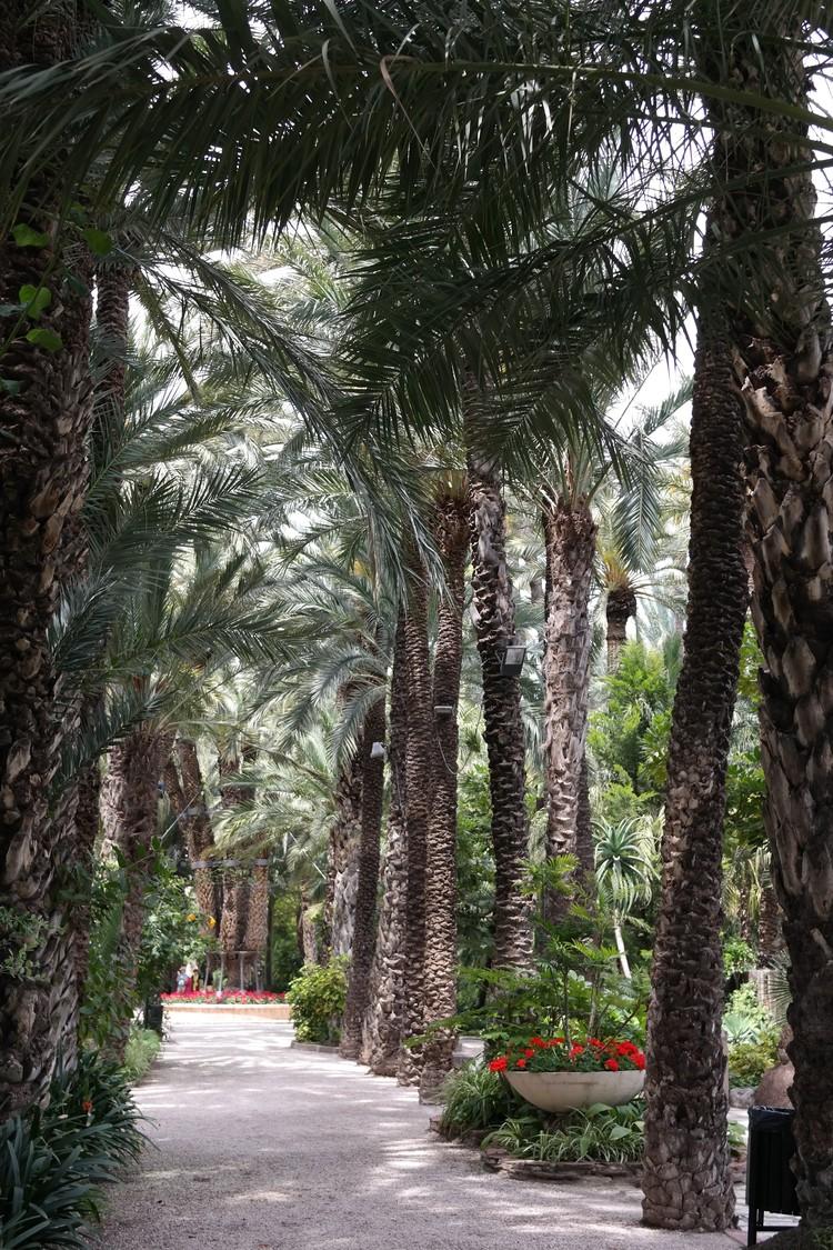 По садам, входящим в Пальмераль, проложен туристический маршрут - 2.5 километра.