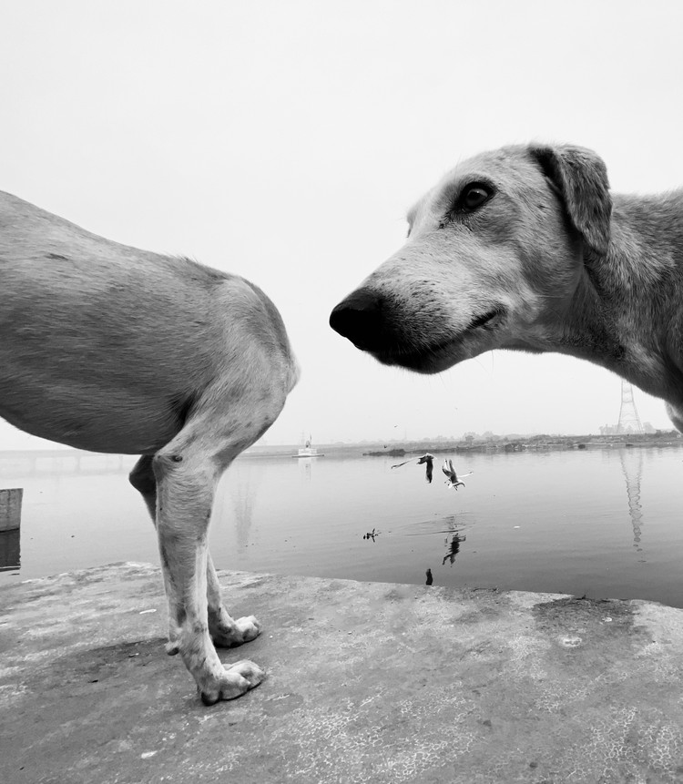 """Ой..."". Автор: Dimpy Bhalotia. Фото предоставлено организаторами конкурса"