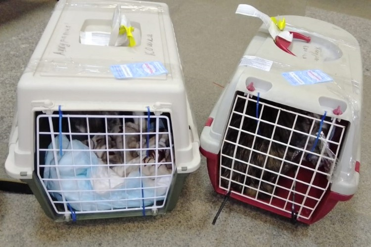 Все очень переживали за их дальний перелет. Фото: волонтерская группа «Дверь в лето»