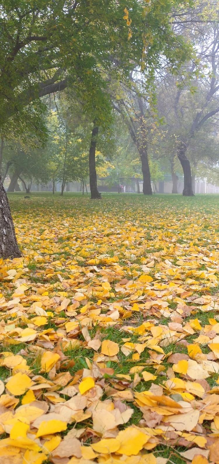В горсаду имени Пушкина появился ковер из листьев. Фото: vk.com / «Горсад им. А.С. Пушкина»