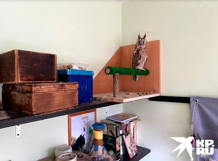 В хозяйской спальне живет сова по имени Пастила.