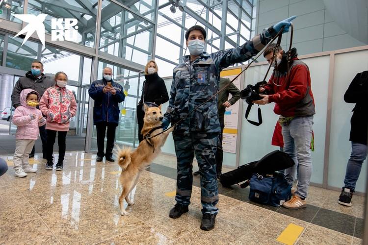 В шутку шалаек еще называют шабаками: шакал + собака.