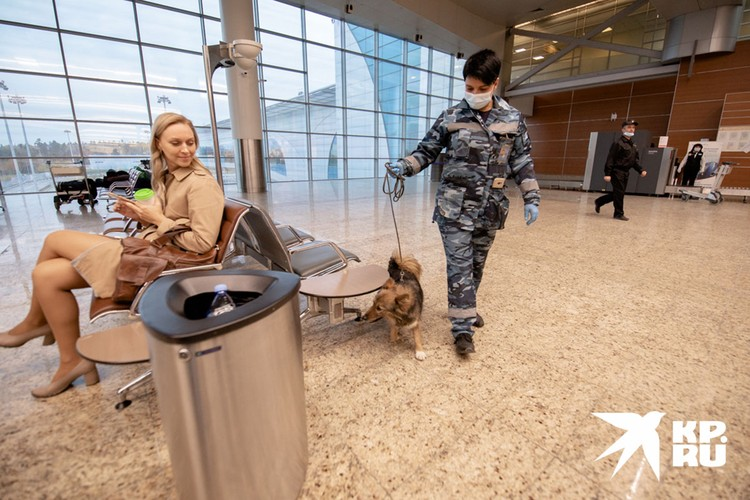 Вот так, прогуливаясь среди пассажиров, пес должен определить больного.