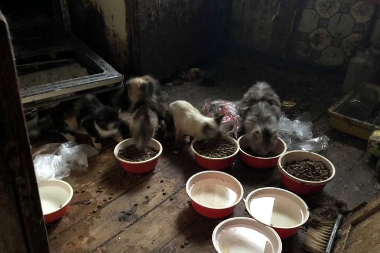 В страшной квартире на Волоколамском проспекте волонтеры обнаружили пару десятков истощенных запущенных котов. Фото: Инициативная группа по защите животных в Твери.