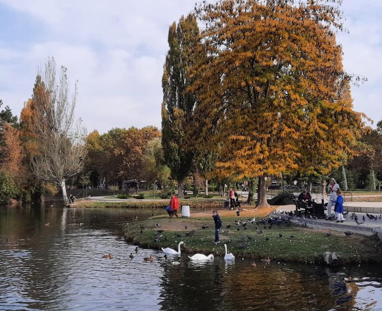 Посетители парка кормят лебедей