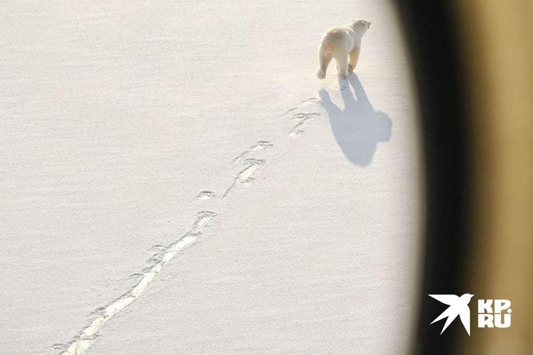 Мониторинг диких животных ведётся с вертолёта. Фото Максима Рязанцева