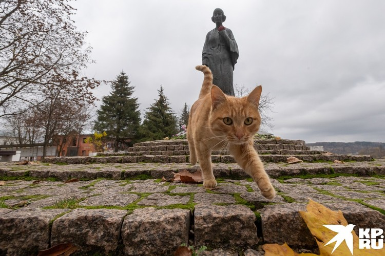 Памятник Марине Цветаевой и местный кот.