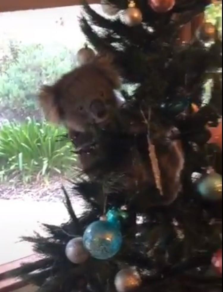 Зверек пытался полакомиться искусственным деревом