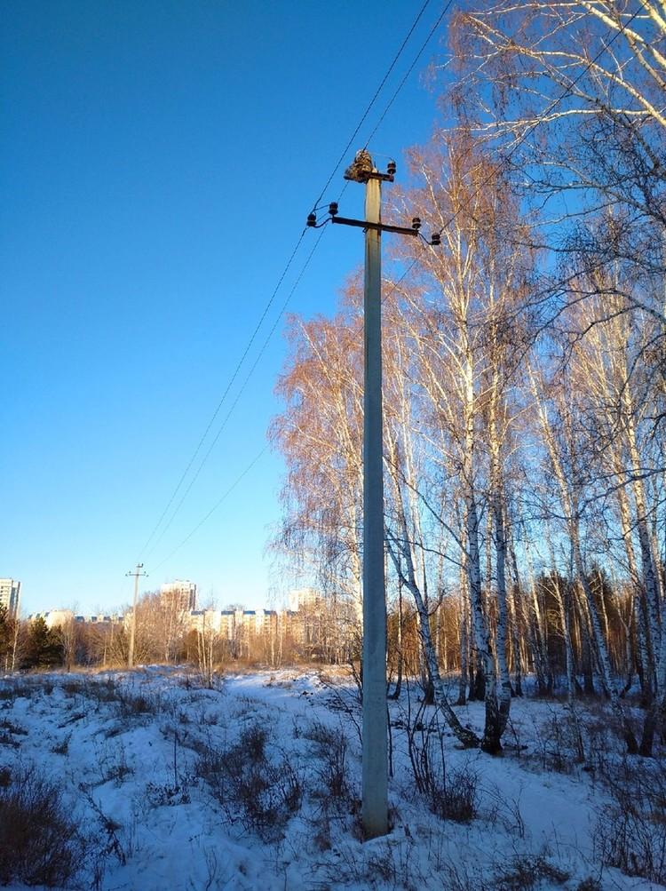 Фото: vk.com/Птицы Челябинской области Егор Попов
