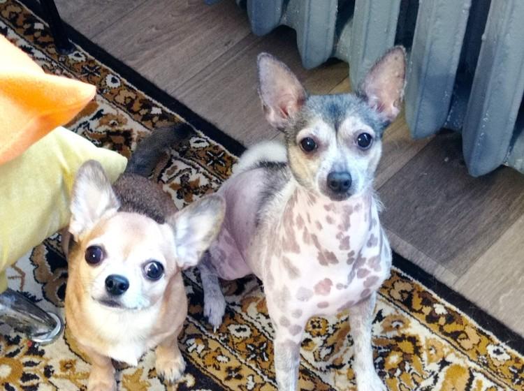 В доме живет еще одна собака Мыша (справа)