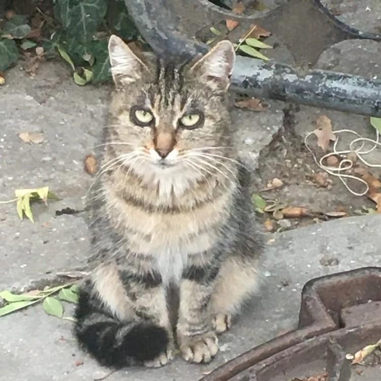 Необычный кот живет в Ялте. Фото: Кристина Логвина