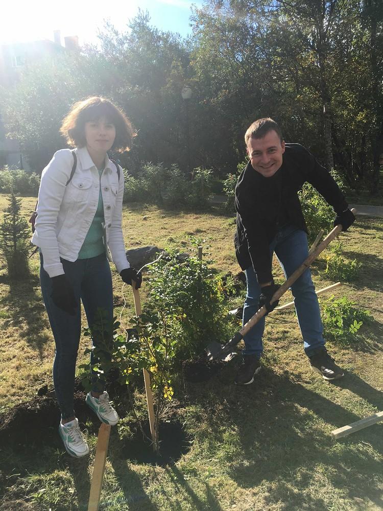 Посадить дерево в городе может каждый. Главное, правильно выбрать сезон, вид и место.