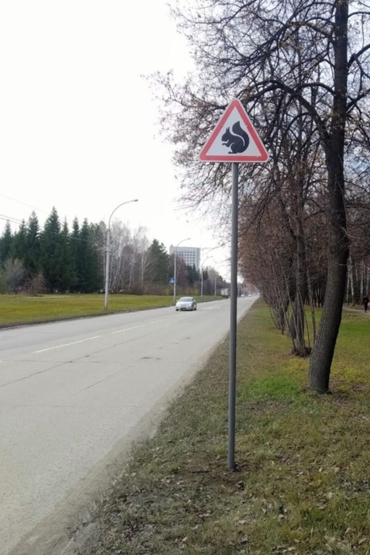 """Знак """"Осторожно, белки!"""" предупреждает водителей снизить скорость. Фото: предоставлено станцией юных натуралистов."""