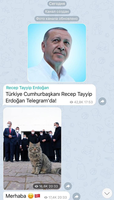 Эрдоган зарегистрировался в Телеграме и запостил котика