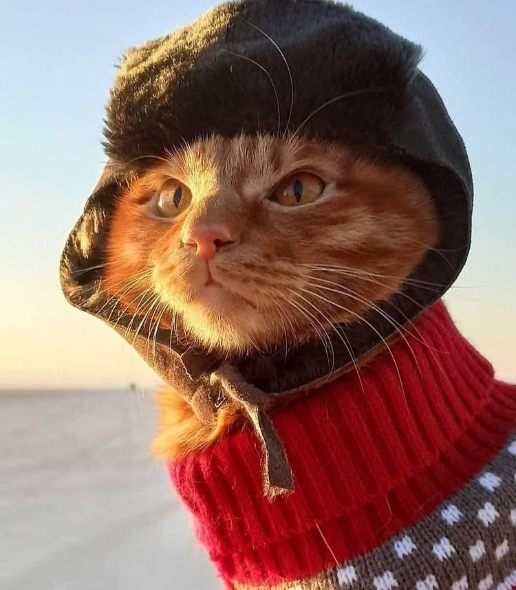 Котик покорил россиян Фото: instagram.com/primfrog77