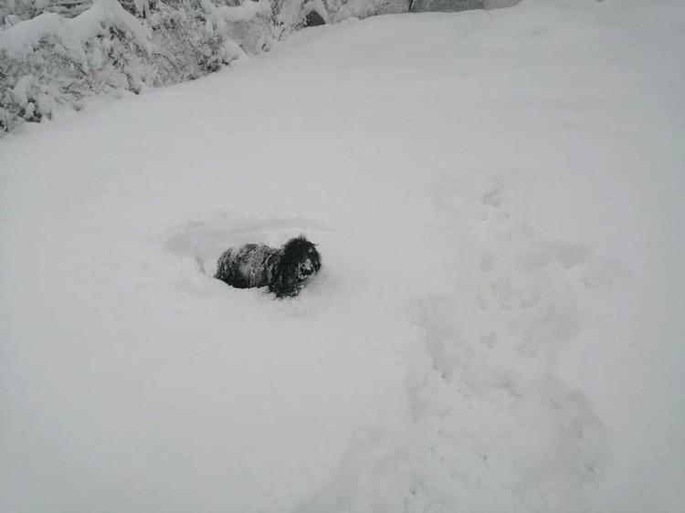 Собаки на прогулке проваливаются с сугробы. Фото: facebook/Александра Латушко