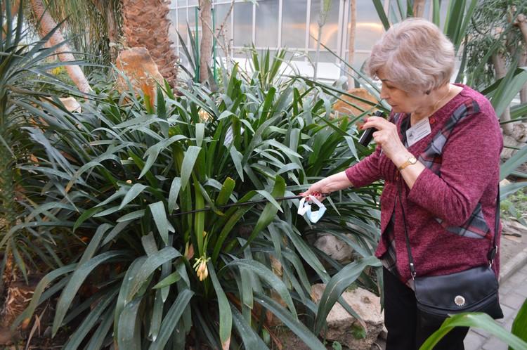 Коллекционный фонд Донецкого ботанического сада насчитывает больше 8 тысяч видов