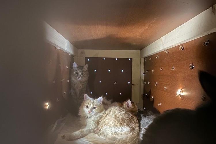 Животные приехали в Сыктывкар.