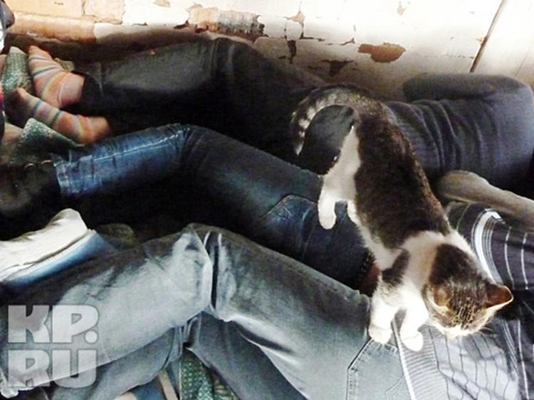 Журналисты, замученные пришельцами, были не в силах даже кошку прогнать