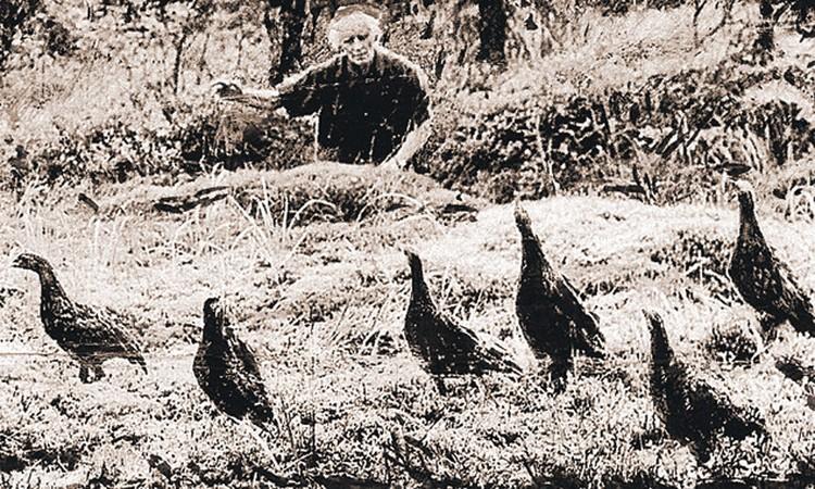 Молодые птенцы.
