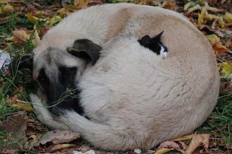 Даже собаки и кошки на улице живут в согласии