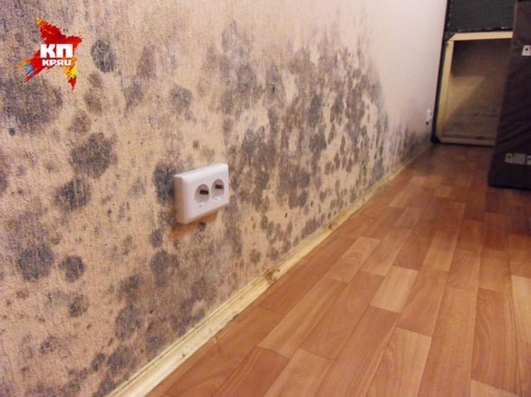 Все стены в квартире Дородонцевых покрыты плесенью.